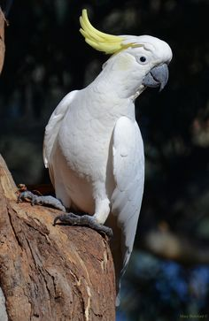 Sometimes our pets want to play, but we're just too busy or we aren't in the mood to join in. When this cockatoo named Harley wanted to play catch, she took Beautiful Birds, Animals Beautiful, Animals And Pets, Cute Animals, Australian Parrots, Pigeon Pictures, Colorful Parrots, Australia Animals, Rare Birds