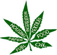 JDTV Nieuwsbullet: Chemopatiënten kweken stiekem cannabis
