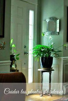 Claves para el cuidado de las plantas de interior
