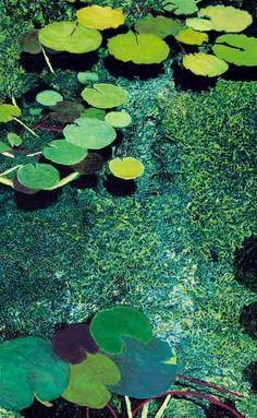"""""""Green Shimmering Pond"""": Allan P Friedlander"""