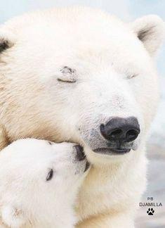amzn.to  ☼ p. djamilla / ours blanc polaire polar bear
