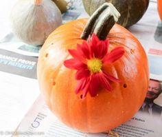 DIY Floral Pumpkin Centerpieces for Thanksgiving   I love how easy and simple these Thanksgiving centerpieces are. Drill holes in your pumpkins and gourds and add some fall mums or other hearty flowers.