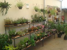 Floricultura - caixarias