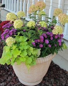 heuchera container garden -