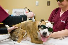 Canine Rehabilitation | The University of Tennessee