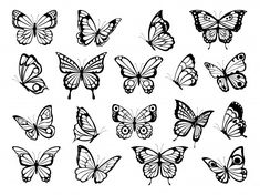 Silhouettes of butterflies. Black pictures of funny butterflies. Insect butterfly black silhouette, winged gorgeous animal, vector illustration - Buy this stock vector and explore similar vectors at Adobe Stock Butterfly Outline, Butterfly Sketch, Butterfly Stencil, Butterfly Illustration, Butterfly Tattoo Designs, Butterfly Pictures, Butterfly Shape, Hip Tattoo Designs, Tattoo Ideas