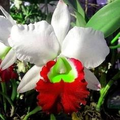 exotic flowers meaning Strange Flowers, Unusual Flowers, Rare Flowers, Flowers Nature, Tropical Flowers, Amazing Flowers, Colorful Flowers, Beautiful Flowers, Lilies Flowers