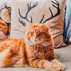 A fotógrafa russa KristinaMakeeva tem um gato chamado Kotleta, que é seu companheiro e de … [+] Leia mais
