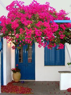 People would remember my house by describing it as White house with blue door and window and Bougainvillea :) Beautiful Gardens, Beautiful Flowers, Beautiful Places, Bougainvillea, Illustration Blume, Santorini, Mykonos Greece, Flower Decorations, House Colors