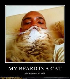 cat beard the king of the pirates
