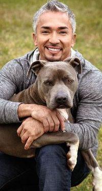 10 Top Dog Training Tips from the Dog Whisperer. #cesarmillan
