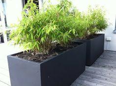Cattis och Eiras Trädgårdsdesign: Dela av uteplatsen så att små rum bildas. Gärna med hjälp av stora krukor och växter. Som här, med bambu.