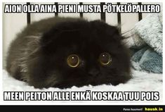 Funny Meems, Some Fun, True Stories, Finland, Haha, Mood, Memes, Animals, Humor