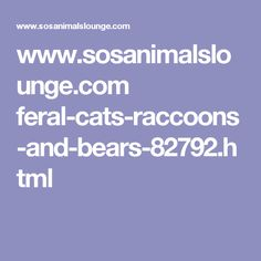 www.sosanimalslounge.com feral-cats-raccoons-and-bears-82792.html