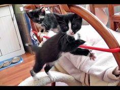The Kitten Circus   #video #animals #cats