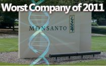 Biotech giant Monsanto has been declared the Worst Company of 2011 by NaturalSociety for threatening both human health and the environment.