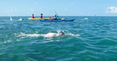 Endurance Swimming: Swim Around Key West.Both solo swimmers and relay teams will love the warm welcome provided by this annual event. With gorgeous Floridean sunshine, plenty of (friendly) aquatic life, and clear, warm waters, the biggest challenge in this endurance swim might be resisting the urge to float along and enjoy the view.