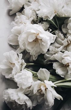 Are these double tulips? My Flower, White Flowers, Beautiful Flowers, White Roses, Flowers Background, No Rain, Deco Floral, Flower Aesthetic, Aesthetic Beauty