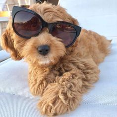 When you've had one too many glasses of Chardognnay 🍷🐶 Keep Your Cool, My Mom, Puppy Love, Puppies, Cool Stuff, Glasses, Dogs, Animals, Instagram