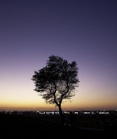 Tree at Dusk by rahsoft, via Flickr good article on landscape composition tips from Digital Photography School