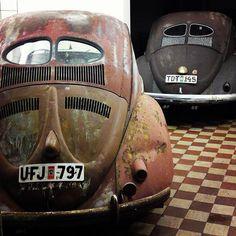 VW split window beetles
