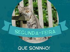 De segunda-feira ninguém quer acordar, né? Ai que sono que dá... #segundafeira #sono #animais