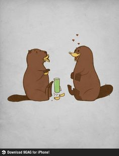 Funny pictures about How a beaver flirts with a platypus. Oh, and cool pics about How a beaver flirts with a platypus. Also, How a beaver flirts with a platypus photos. Funny Shit, Funny Cute, The Funny, Funny Stuff, Random Stuff, Funny Things, That's Hilarious, Crazy Things, Happy Things