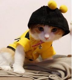 Cat costume – Accessories & Products for Cats