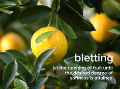 I always overdo avocados. . . . . #devonstrang #wordoftheday #wotd #word #words #wordporn #dictionary #language #definition #bletting #fruit #ripe #lemon #avocado
