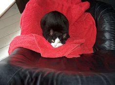 Aww....sweet kitty!