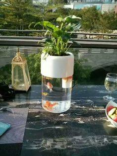 Amazon.com : Smart Ecological Cycle fish tank Aquarium and planter or Vase