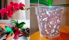 Our 6 top tips for looking after your orchids