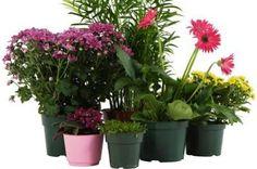 Условия за стайните цветя и растения