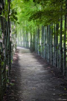 Woodsy path. Image Copyright Denise Ippolito