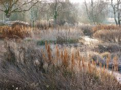 In winter, Piet Oudolf leaves perennial grasses standing to create moody…