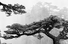 For almost four decades Wang Wusheng has photographed China's renowned Mt. Huangshan mountain range, also known as the Yellow Mountains. Chinese Landscape Painting, Landscape Paintings, Landscapes, Gaia, Landscape Photography, White Photography, Bonsai Art, World Of Color, Ink Painting