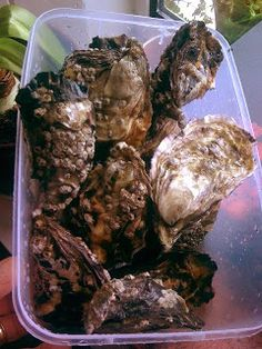Donegal Bay Oysters & How I open an Oyster! Irish English, English Food, Welsh Recipes, Ireland Food, Cottage Pie, Saint Patrick, Donegal, Oysters, Food And Drink