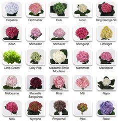 Hydrangeas by color via Hyperactive Farms