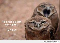 Owl Bomb