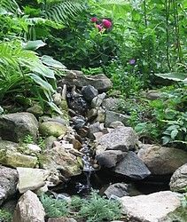 An idea for eliminating some of the space...making it have elevation by creating rocky outcrops like this amongst the ferns and other plantings. May work for space, very well.