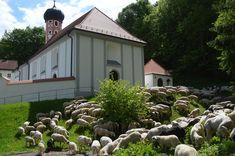 "Altmühltaler Lamm-Auftrieb - Schafsegung an der Wallfahrtskirche ""Maria End"" - wieder 18./19. Mai Plants, Lamb, Natural Stones, Tourism, Culture, Plant, Planets"