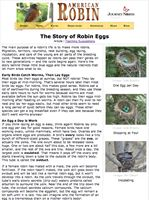 The Story of Robin Eggs - article and teaching suggestions