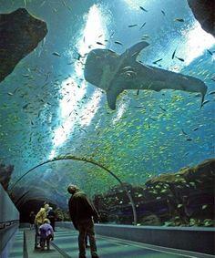 Amazing World's Largest Aquarium in Atlanta
