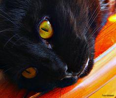 Cat's Eye #cats #blackcats #photography by Clarissa Johal