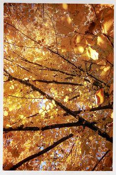 Above Aix Les Bains. Autumn 2015. L'arbre.