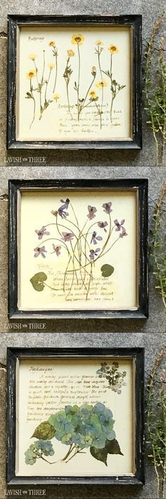 Framed floral botanical prints. Available in Bachelor's Buttons, Blue Hydrangea, Sunny Buttercup, Perfect Pansies, Queen Anne's Lace or Soft Violets. These prints are lovely alone, displayed in pairs, or as a collection. The perfectly tattered look of the frames creates a time-worn shabby chic appeal.