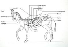 As a medical illustrator I've done equine illustrations for several horse magazines. Susan Harding, one of the editors I worked with, got Jack and I into many of the equine surgical clinics i…