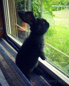 Bunny Is Filled with Wonder at All That Greenery