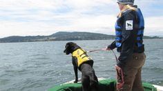 These dogs have a keen nose for whale research and conservation.