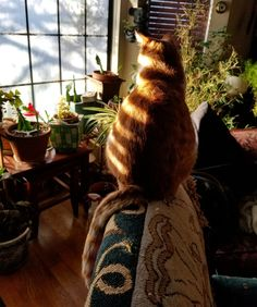 paint my spirit gold Cat Aesthetic, Cute Creatures, Crazy Cats, Cat Lady, Pretty Pictures, Dream Life, Cute Cats, Fur Babies, Decoration